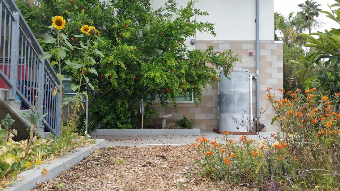 School garden water tank. Copyright Permasystems