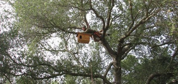 Barn Owl Nest box installation. Copyright Permasystems